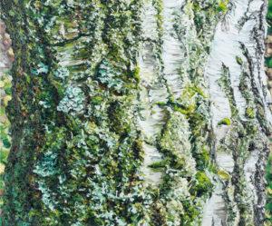 Birke, 100 x 120cm, 2006, Öl auf Leinwand